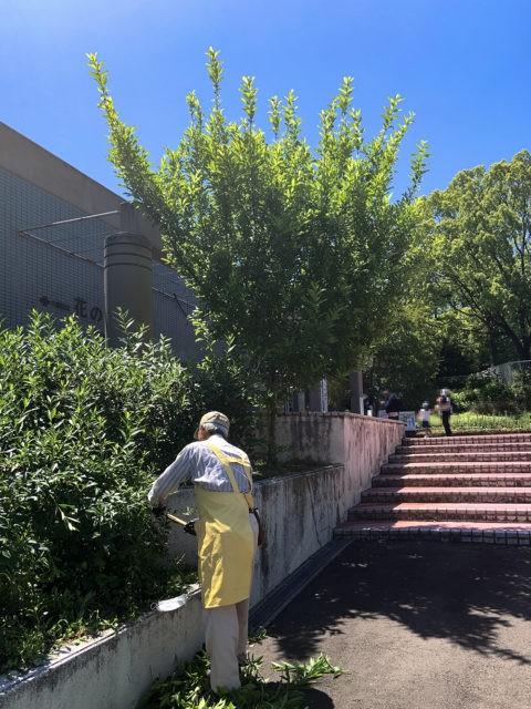 入り口プールそばの樹木剪定