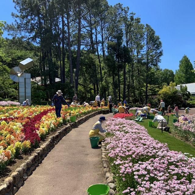 装飾花壇の除草作業