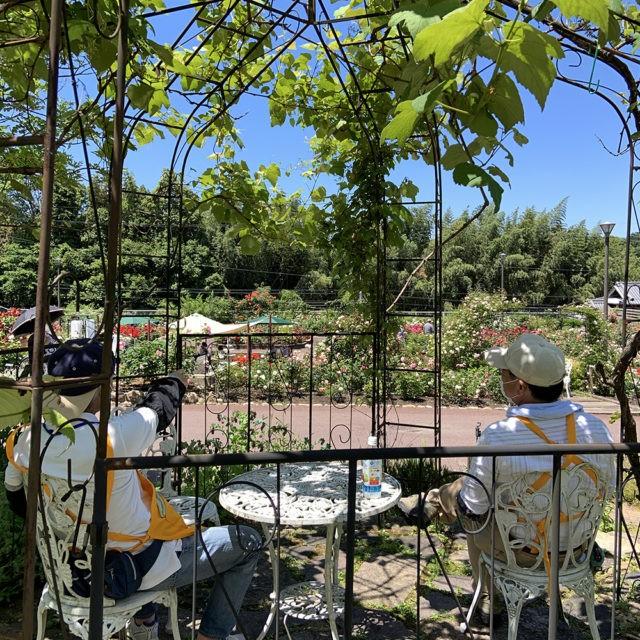 ブドウのアーチから見るバラ園