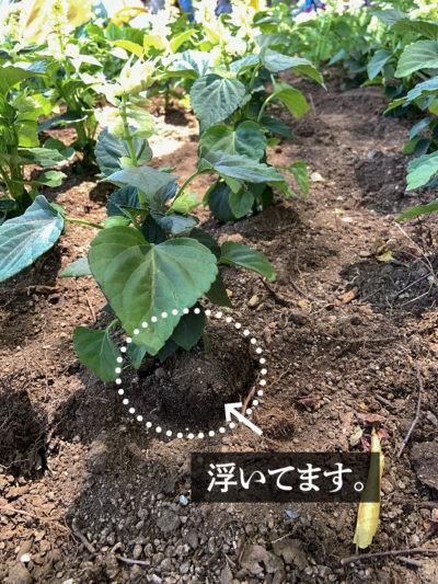 植え付けの例
