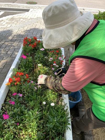 市役所・花柄摘み