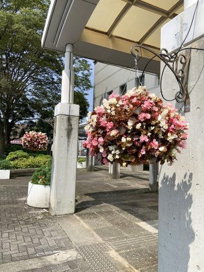 河内長野市役所・ハンギングバスケット