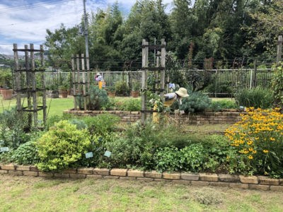 クレマチス園の除草1