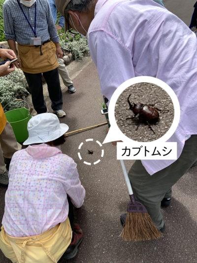 カブトムシ発見
