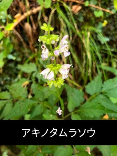 フィールド・岩湧山16