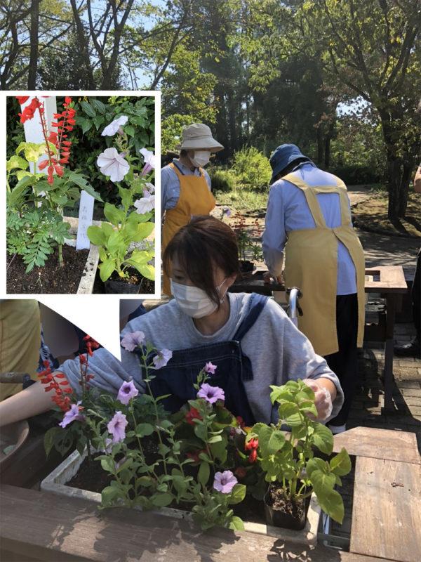 福祉花壇秋の植え替え02