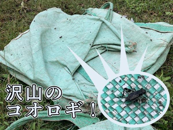 10月1日(木)活動の様子02