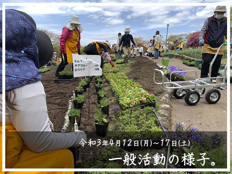 4/12装飾花壇の植え替え24