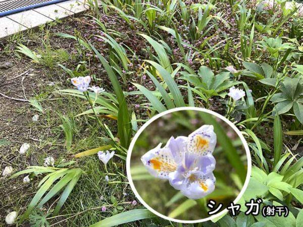 4/21大阪南医療センターの様子07