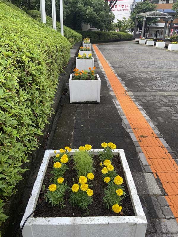 河内長野市役所ハンギング(14日)09