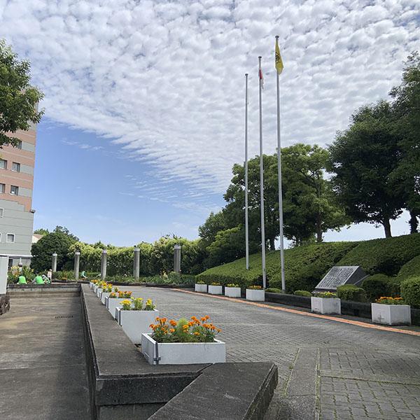 河内長野市役所植え替え最終(20日)08
